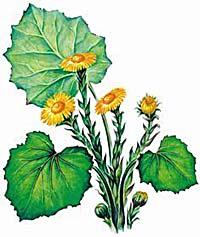 травы для пищеварения и очищения организма